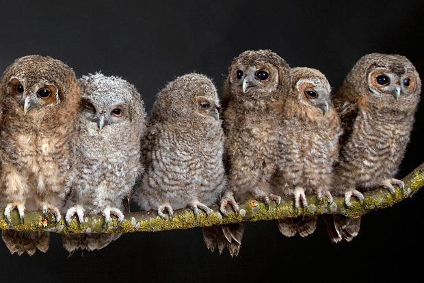 Citaten Over Uilen : Hoe noem je een groep uilen de taalfluisteraar